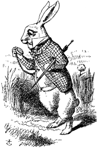 White rabbit down the rabbit hole